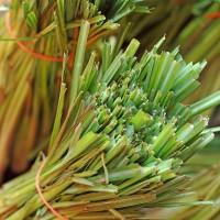 Citrinžolių (kvapiųjų) eterinis aliejus. 5 ml